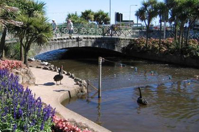 Black Swans in Dawlish